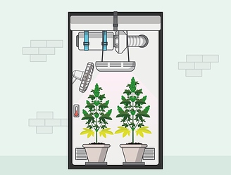 unutarnji uzgoj marihuane