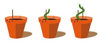 bonsai-weed-trunk-training