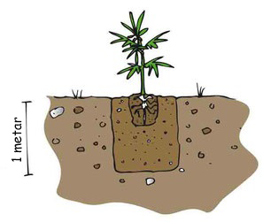marihuana na otvorenom
